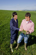 Farmers examining young wheat crop