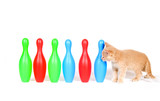 Kitten investigating toy bowling pins poster