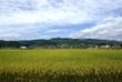 とある村の稲作