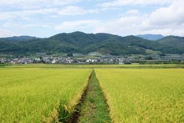 田んぼのある村