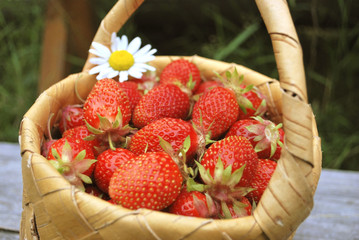 basket of the strawberries