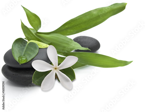 Stones with green leafs and white flower