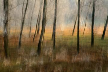 alberi 204