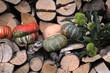Zucche e castagne nella legnaia