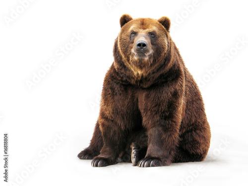 Foto Spatwand Dragen Bear
