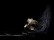 Leinwandbild Motiv carnival mask isolated on black