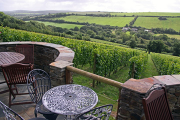 A verdant grape / wine vineyard with farm, table and chairs