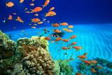 Rafa Koralowa i Scuba Diver
