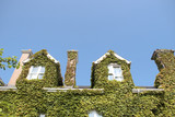 ivy roof top