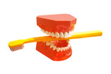Human tooth jaw with toothbrush poster