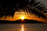 palm leaves on island in sunset