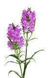 Obedient Flower Plant poster
