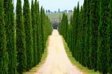 Fototapety Zentralperspektive, Zypressenallee, Wanderweg, Toskana, Italien