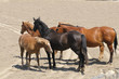 4 Horse Group