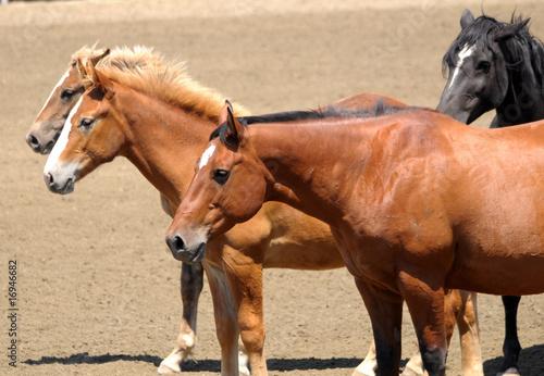 4 Horses