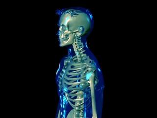 Skeleton - loop wobble (NTSC)