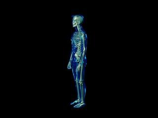 Skeleton - wobble totale (PAL)