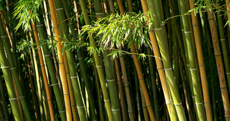 champ de bambou © M.studio