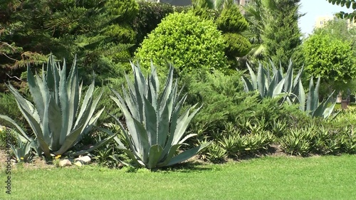 Beautiful garden with aloe vera