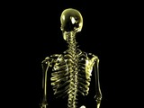 Skelett - loop halbtotale (PAL) poster