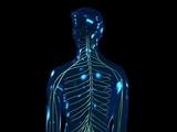 Das periphere Nervensystem - loop (PAL) poster