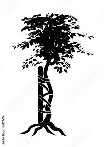 Orthopäden Baum schwarz