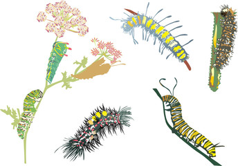 color caterpillar collection