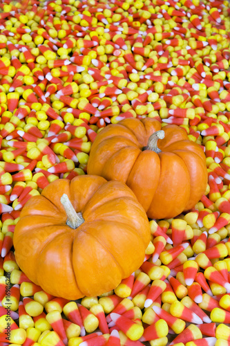 Two mini pumpkins in field of candy corn.