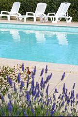 relax au bord d'une piscine fleurie # 03