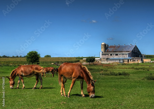 Amish Horse Farm