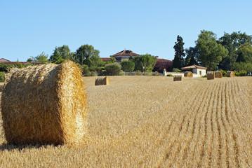 exploitation agricole du sud-ouest # 03