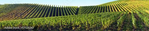 Papiers peints Vin Panorama vignes