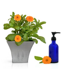 Calendula Flowers and Hand Cream