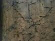 Rissige Mauer, Hintergrund