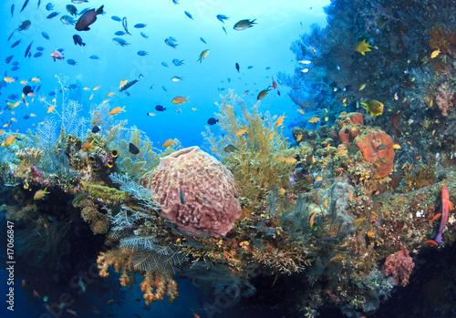 Papiers peints Recifs coralliens Soft corals