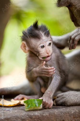 Poster Cute little baby monkey