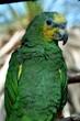 I'm a pretty bird
