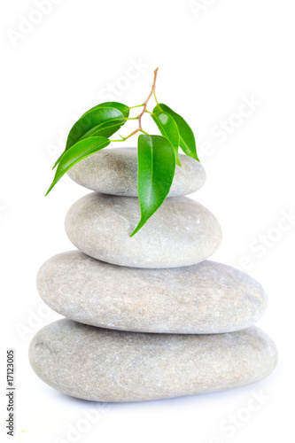Plant on top of pebbles