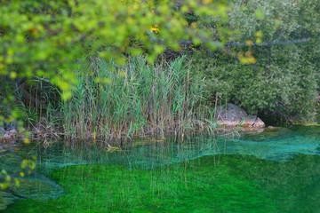 Riserva Naturale Lago di Cornino - Forgaria nel Friuli, UD (6)
