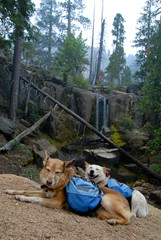 Dogs with Backpacks