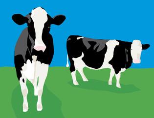 2 vaches dans les champs