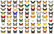 Butterfly - 17156465