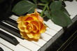 rose on piano key
