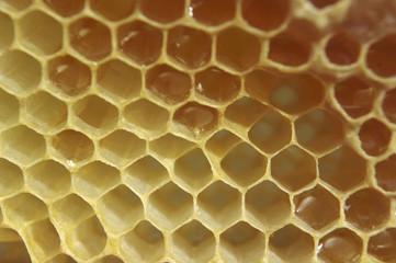 Honeycoms.