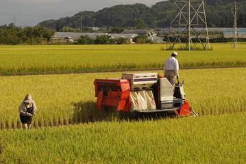 稲刈りの風景