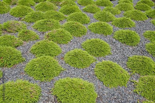 heidepflanzen stockfotos und lizenzfreie bilder auf bild 17194226. Black Bedroom Furniture Sets. Home Design Ideas
