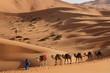 Caravan among dunes, Erg Chebbi, Morocco