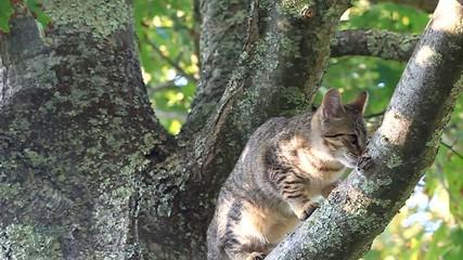 chaton agile dans le chêne