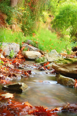 Rocky stream with red leaves