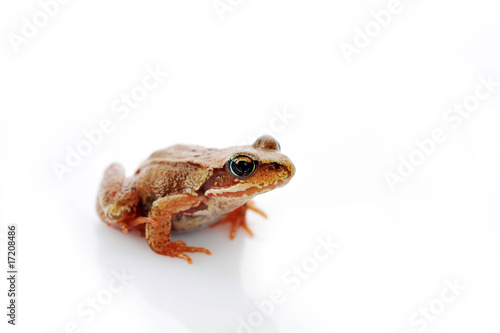 Tuinposter Kikker small frog very close up